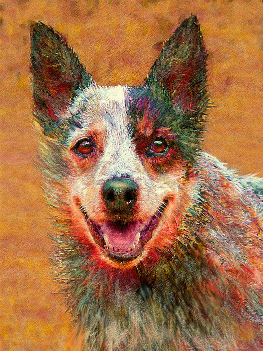 Jane Schnetlage - Australian Cattle Dog