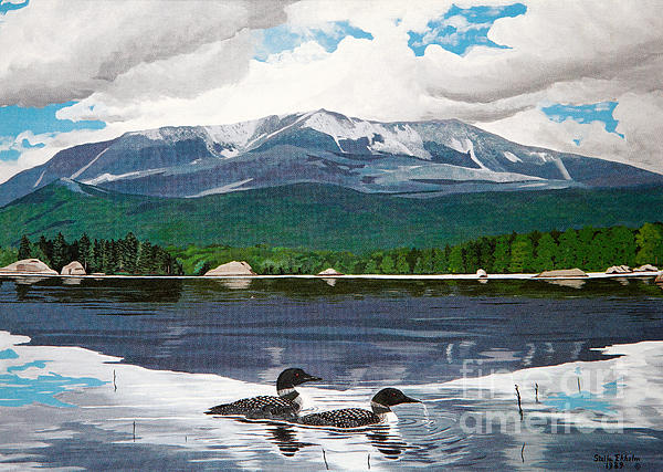 Stella Sherman - Common Loon on Togue Pond by Mount Katahdin
