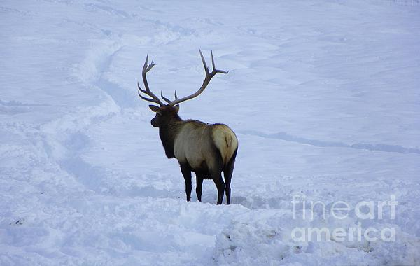 Photography Moments - Sandi - Elk Winter Photography