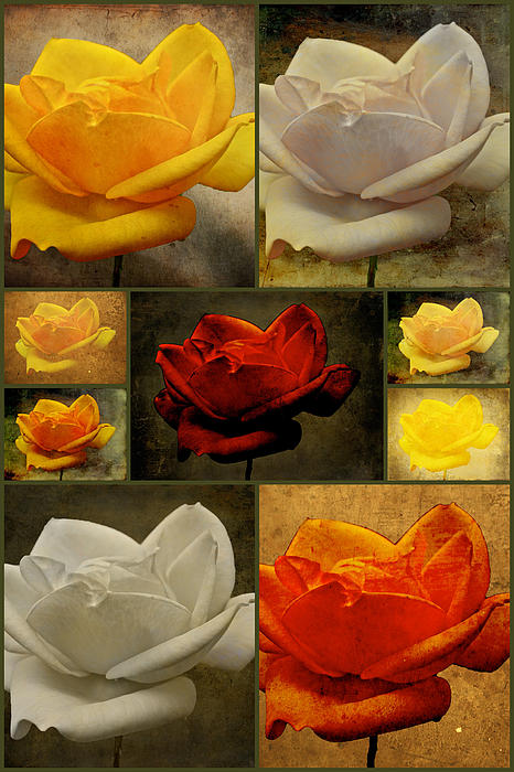 Carol Senske - Enigma Of The Yellow Rose Collage