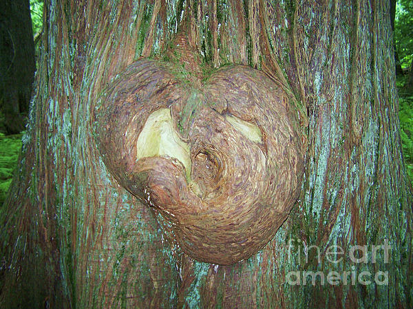 Photography Moments - Sandi - Heart on a Tree - Glacier National Park