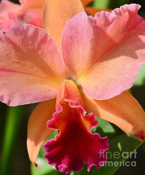 Kathleen Struckle - Orange Orchid