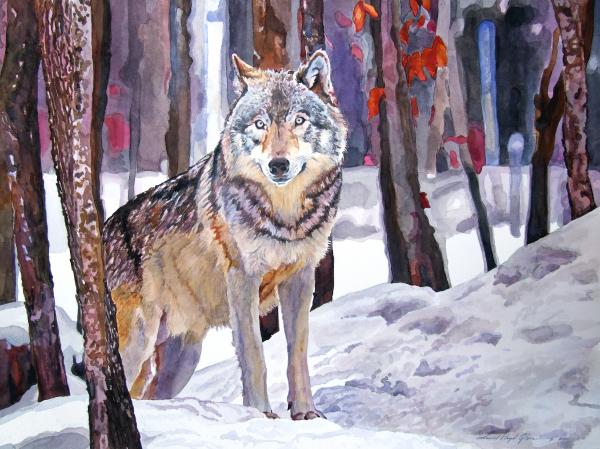 David Lloyd Glover - The Lone Wolf