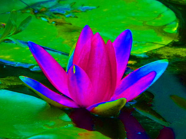Billie sue  Crownover - Abstract water Lily