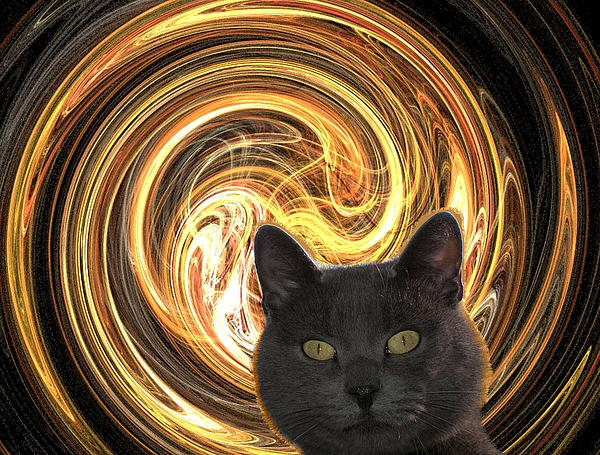 Zsuzsa Balla - Cat in spiral of life