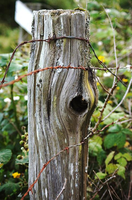 Angi Parks - Cedar Fence Post