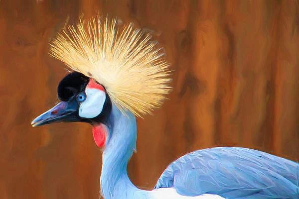 Heidi Smith - Crowned Crane
