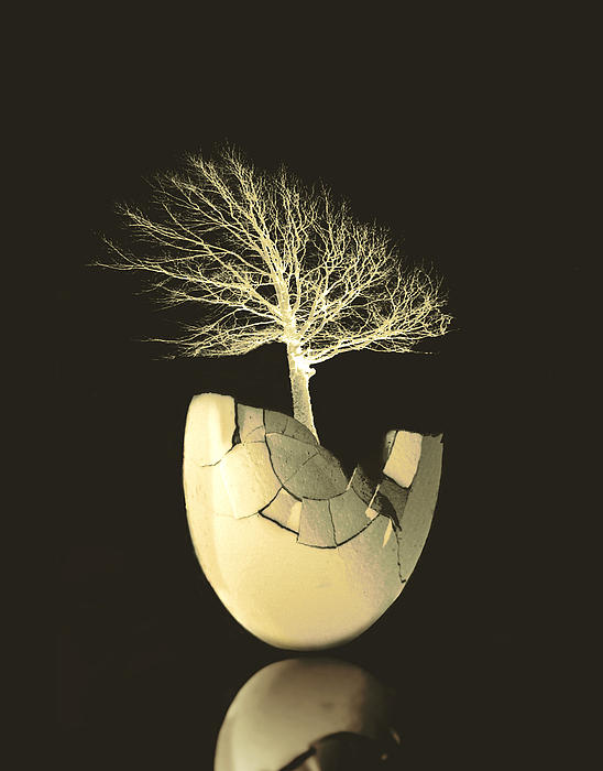 Ann Powell - Egg Tree