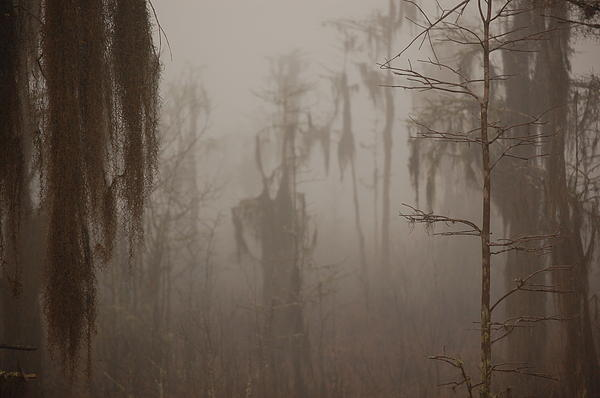Daniel Young - Foggy Swamp