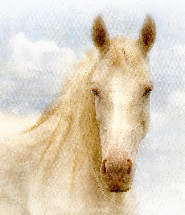 Datha Thompson - Horse Portrait 2