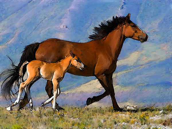 Shere Crossman - Mustang Mare and Foal