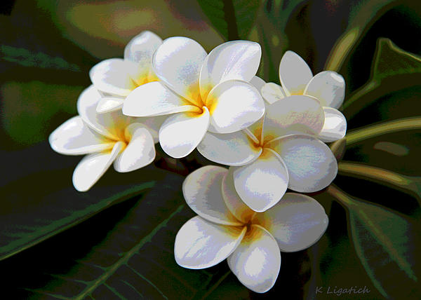 Kerri Ligatich - Plumeria - Golden Hearts - Digital Artwork