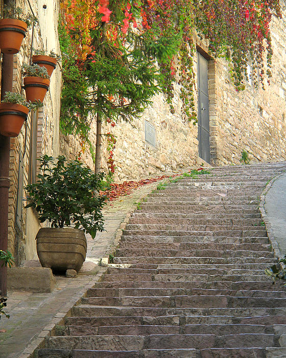 Greg Matchick - Red Ivy and Steps in Assisi Italy