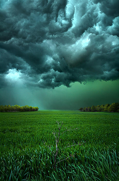 Phil Koch - There Came a WInd
