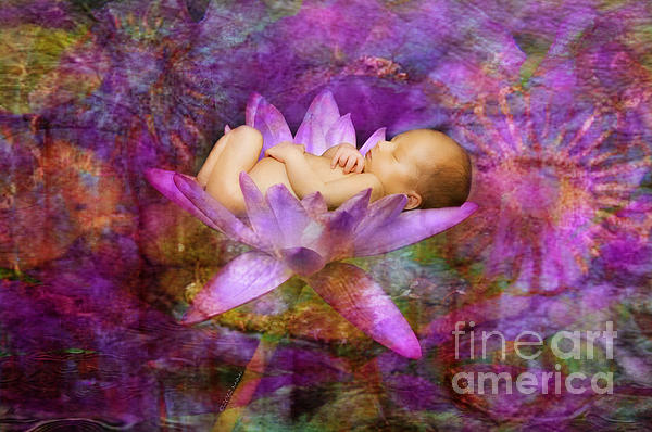 MiMi  Photography - Violet Lotus Dream Baby