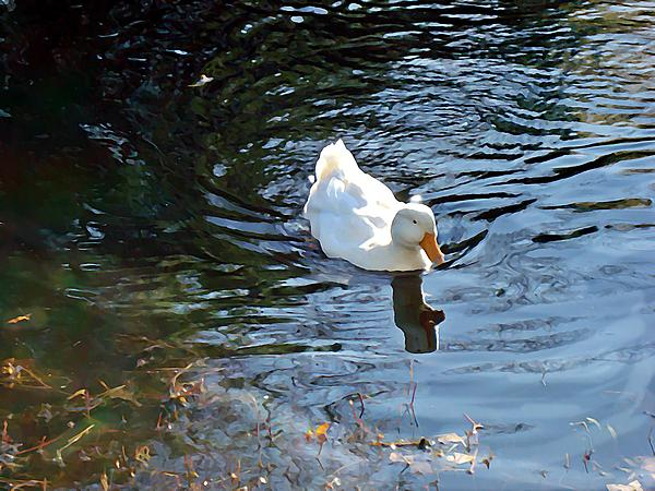 Joan Meyland - White Duck