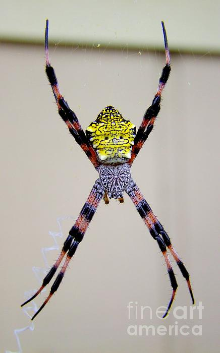Mary Deal - Zipper Spider