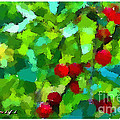 Arif-zenun  shabani -  Cherry In My Garden 2011
