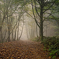 David Tinsley -  Misty Autumn Beech
