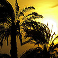 Claudio Bacinello -  Sunset and Palms