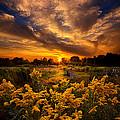 Phil Koch - A Peaceful Easy Feeling
