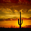 Saija  Lehtonen - A Sonoran Sunset