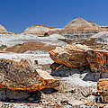 Bob and Nadine Johnston - Arizona Petrified Forest...