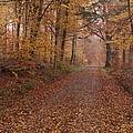 Miguel Winterpacht - Autumn Trails