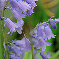 Roger Reeves  and Terrie Heslop - Blue Bells