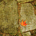 Marianne Campolongo - Leaf on Stones Squared