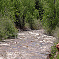 Janice Rae Pariza - Dolores River Colorado