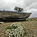 Lesley Rigg - Dungeness