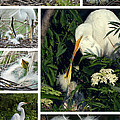 Dawn Currie - Egret Mother and Chicks