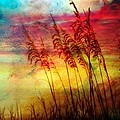 Kathy Jennings - Fiery Sunrise