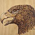 Ron Haist - Golden Eagle