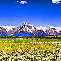 Allen Beatty - Grand Teton Wildflowers