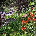 Lynn Bauer - High Country Wildflowers