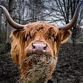 Paul and Fe Photography Messenger - Highland Cow