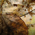 Shirley Sirois - Leaf Patterns