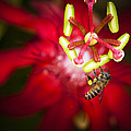 Zoe Ferrie - Macro photograph of a...
