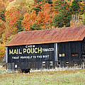 Dan Myers - Mail Pouch Barn