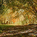 Photography Moments - Sandi - Pathway through Autumn