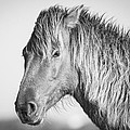 Bob Decker - Portrait of a Wild Horse