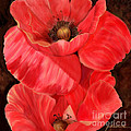 Joan A Hamilton - Red Poppy One