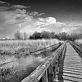 Guido Montanes Castillo - The bridge
