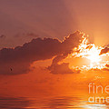 Angela Doelling AD DESIGN Photo and PhotoArt - The Sunset