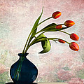 Mark Ashkenazi - Tulips 6