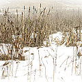 Thomas R Fletcher - Winter Fog and Cattails