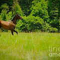 JT PhotoDesign - Horse on a green pasture