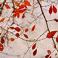 Darren Fisher - Leaves of Autumn